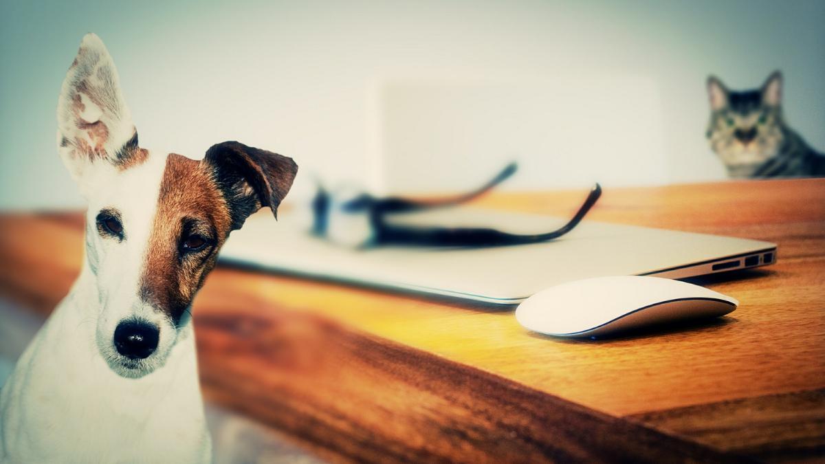 Grad Požarevac doneo odluku na štetu vlasnika pasa