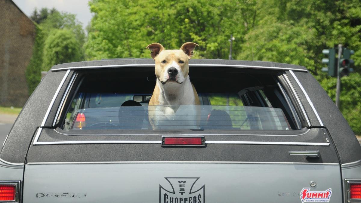 Šverc pasa je problem po dobrobit životinja